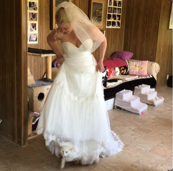 cat under brides dress photobomb