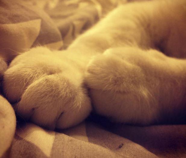 cat paws 11