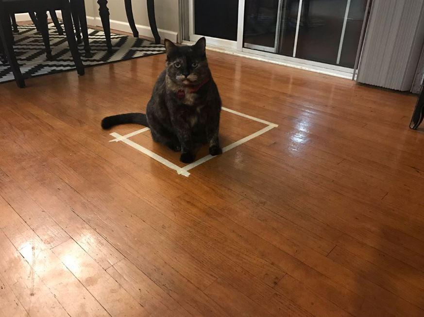 cat trap 8