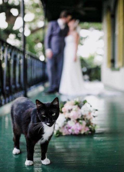 tuxedo cat wedding photobomb