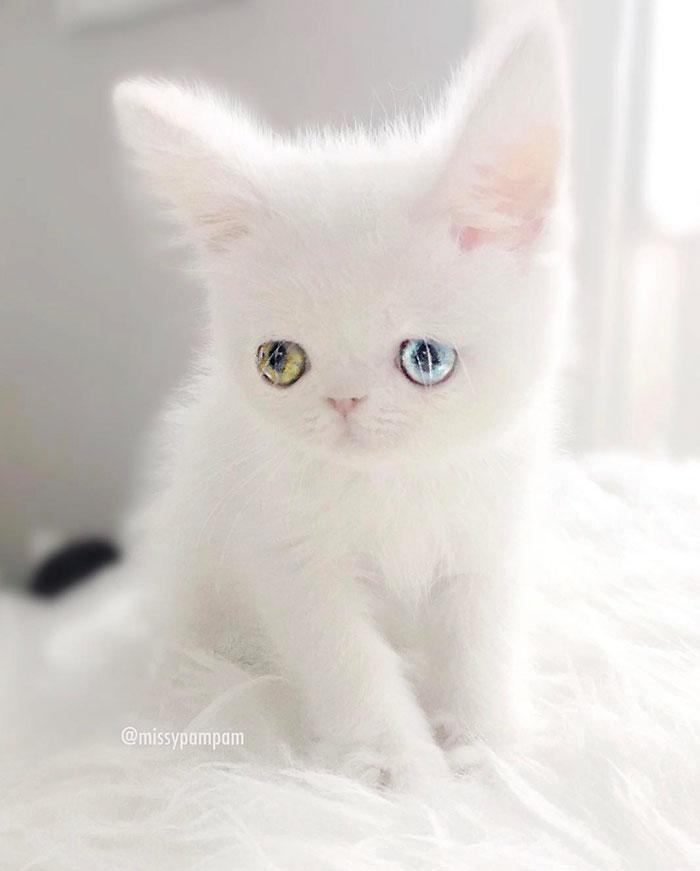 pam pam the cat 2