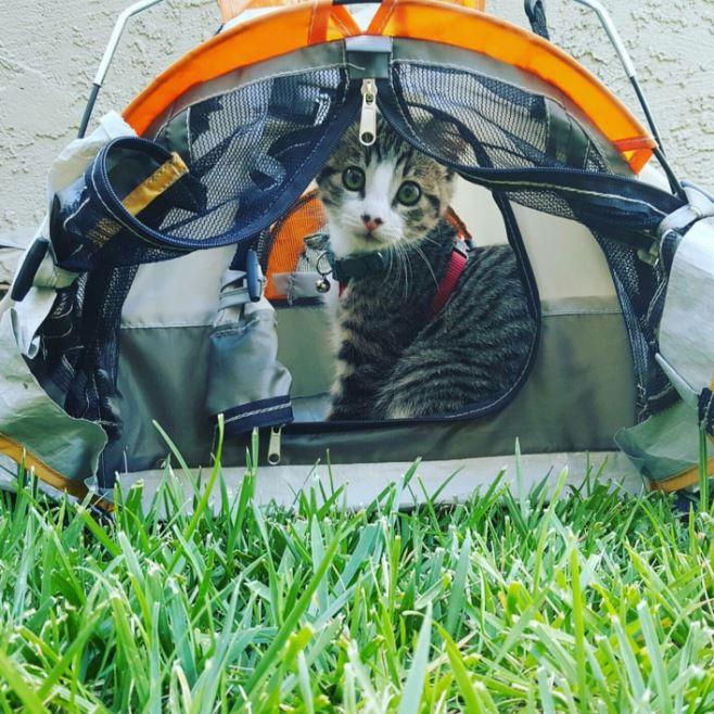 cat camp tent 2