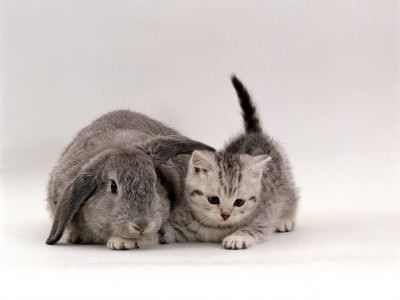 matching kitten and bunny grey