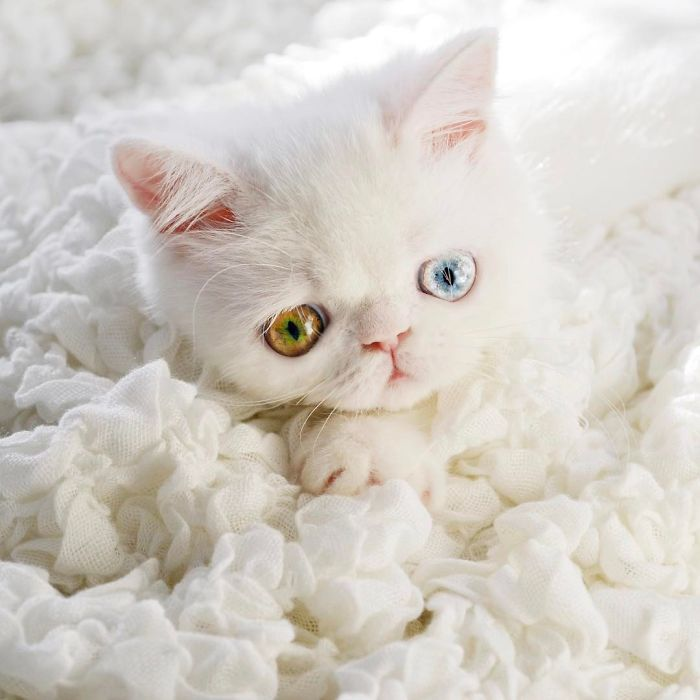 pam pam the cat 9
