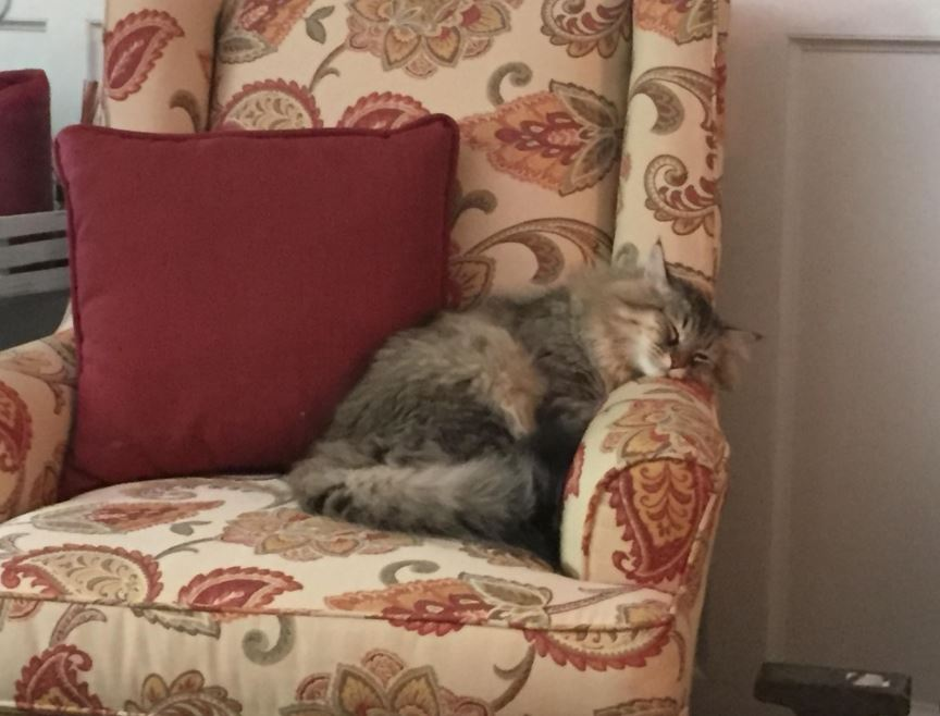 max the cat napping in his chair