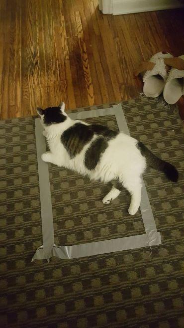 cat trap 16