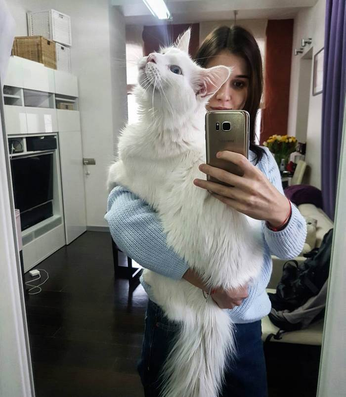 Tihon the maine coon cuddling with mom 9