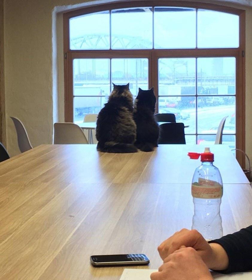 mayor cat 2