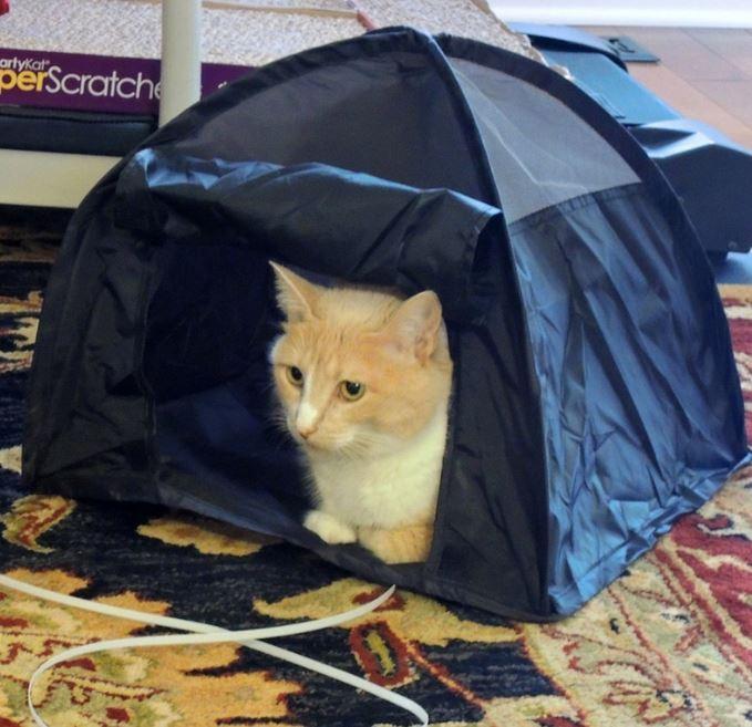 cat camp tent 3