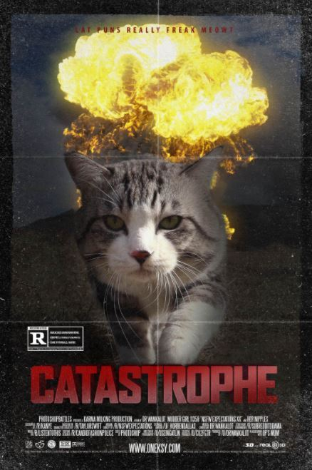 Best Cat Photo On The Internet