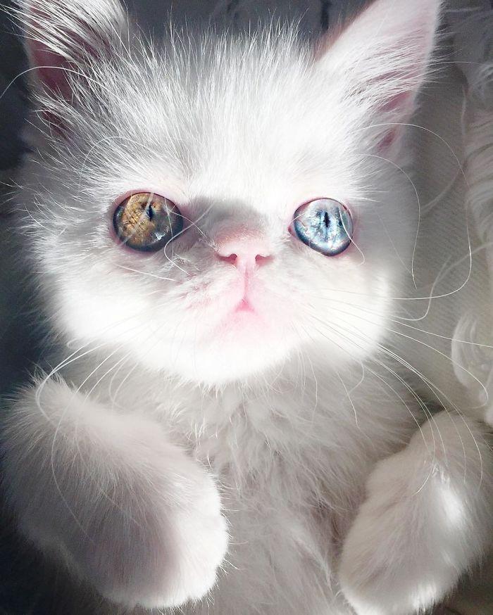 missy pam pam the cat