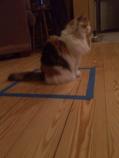 cat trap 10