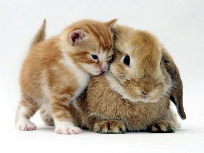 matching kitten and bunny tan 2