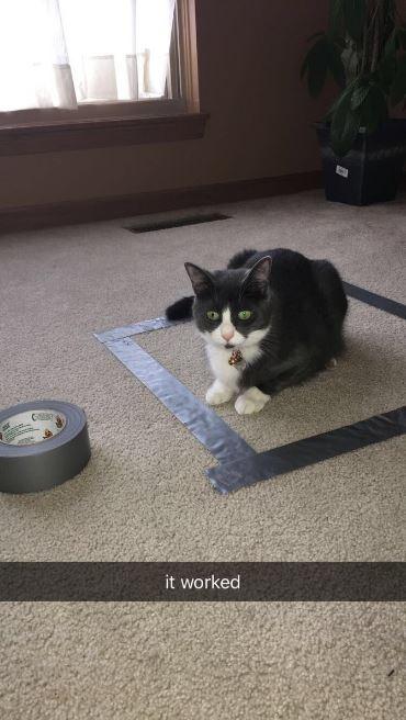 cat trap 11