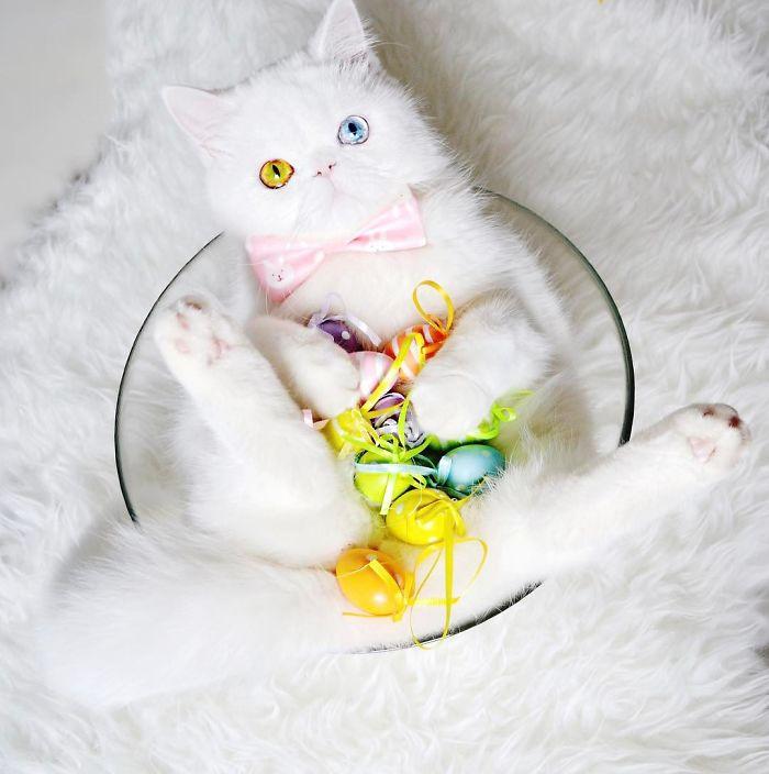 pam pam the cat 7