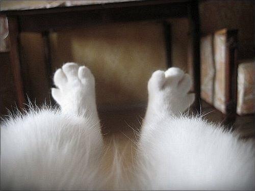 cat paws 9