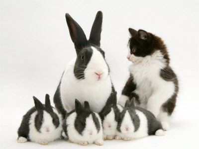 matching kitten and bunny family black and white