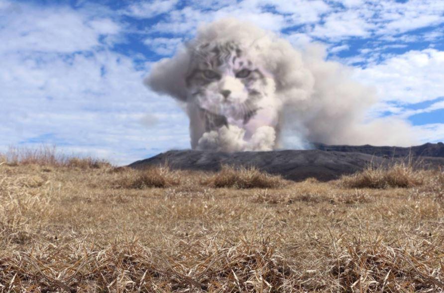 cat explosion photoshop 1
