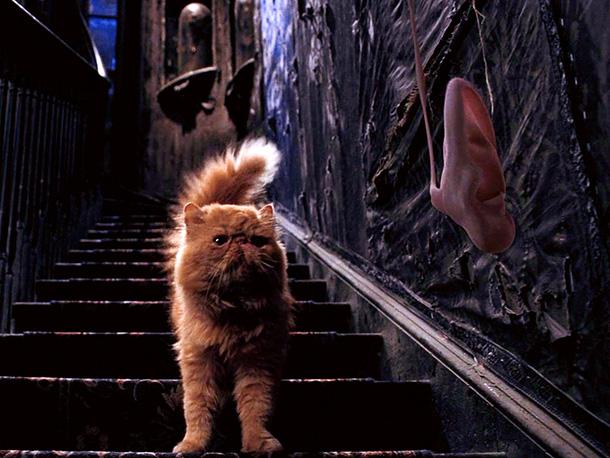 Hermione's Cat: Crookshanks - Hermione Granger Photo ...  |Harry Potter Hermione And Crookshanks