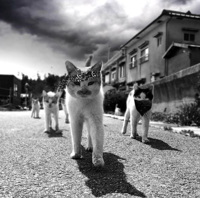 kitty gang cat photoshop battle