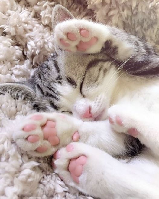 pink jelly bean toes kitten