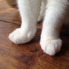cat paws 4