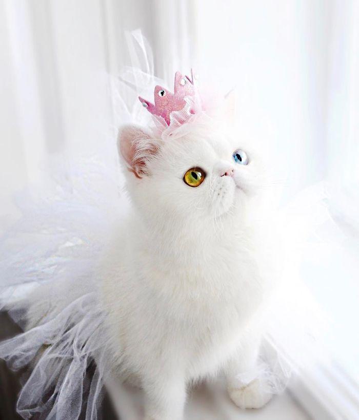 pam pam the cat 8