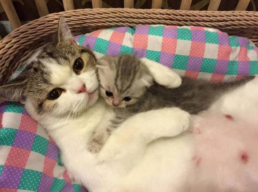 cat mom and kitten