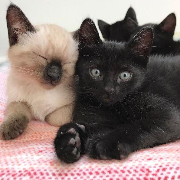 kittens wrestle nap