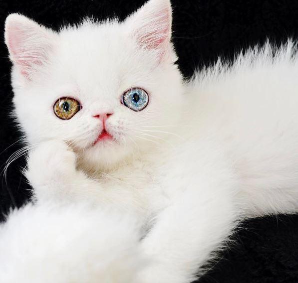 pam pam the cat 12