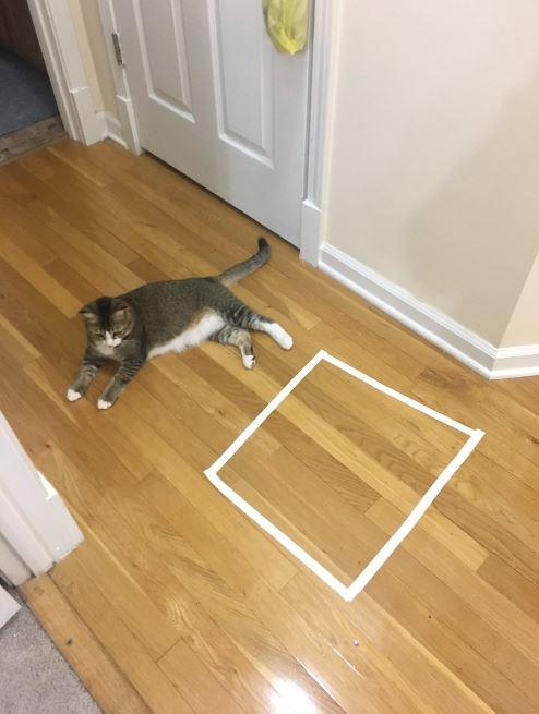 cat trap 17