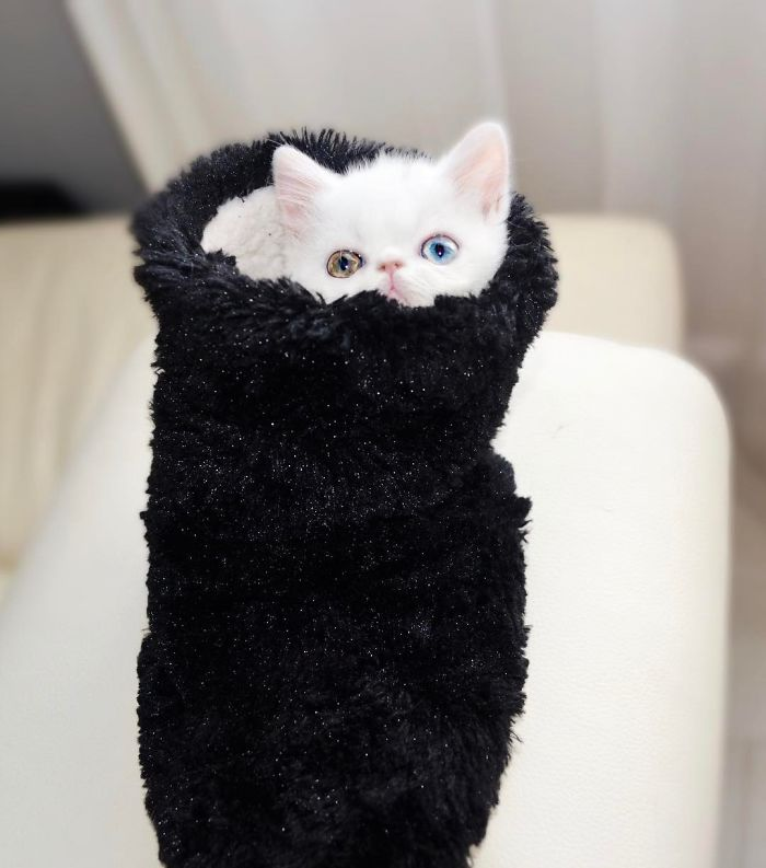 pam pam the cat 5