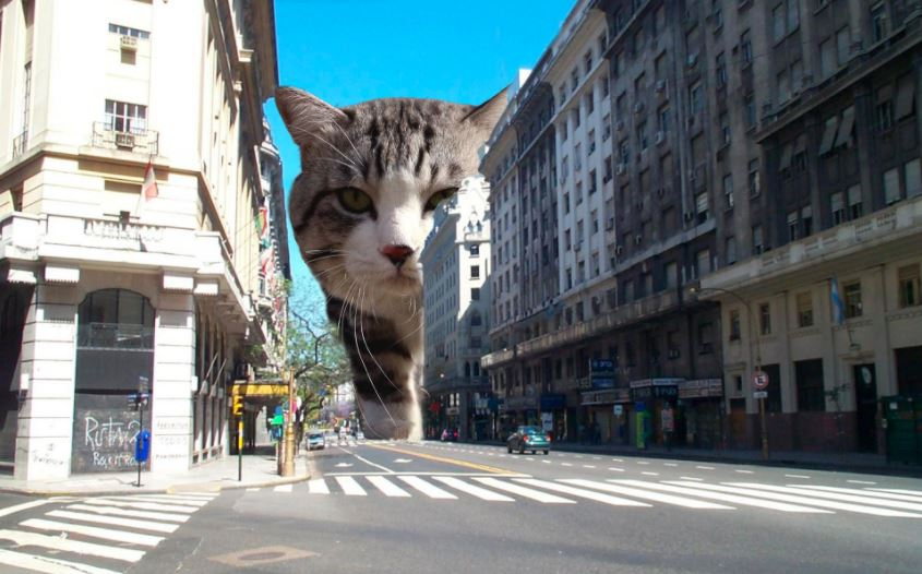 cat explosion photoshop 12