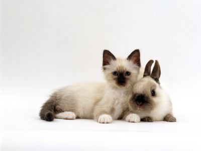 matching kitten and bunny brown and white