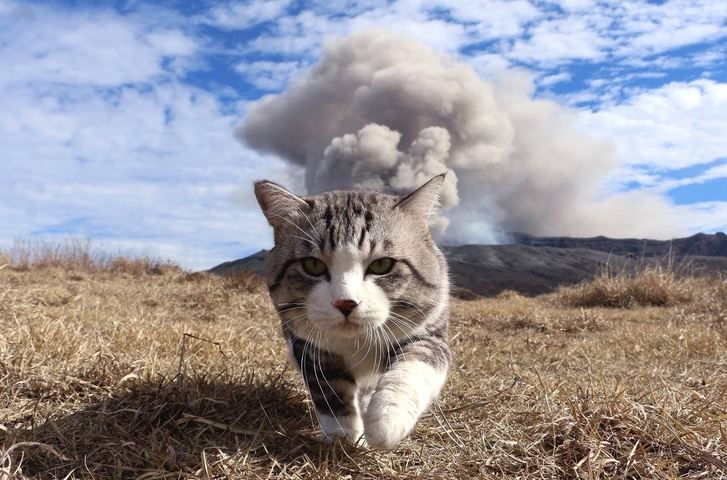 Badass Cat