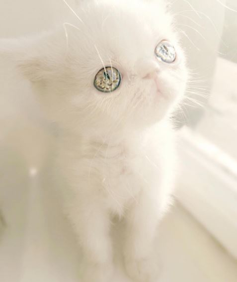 pam pam the cat 11