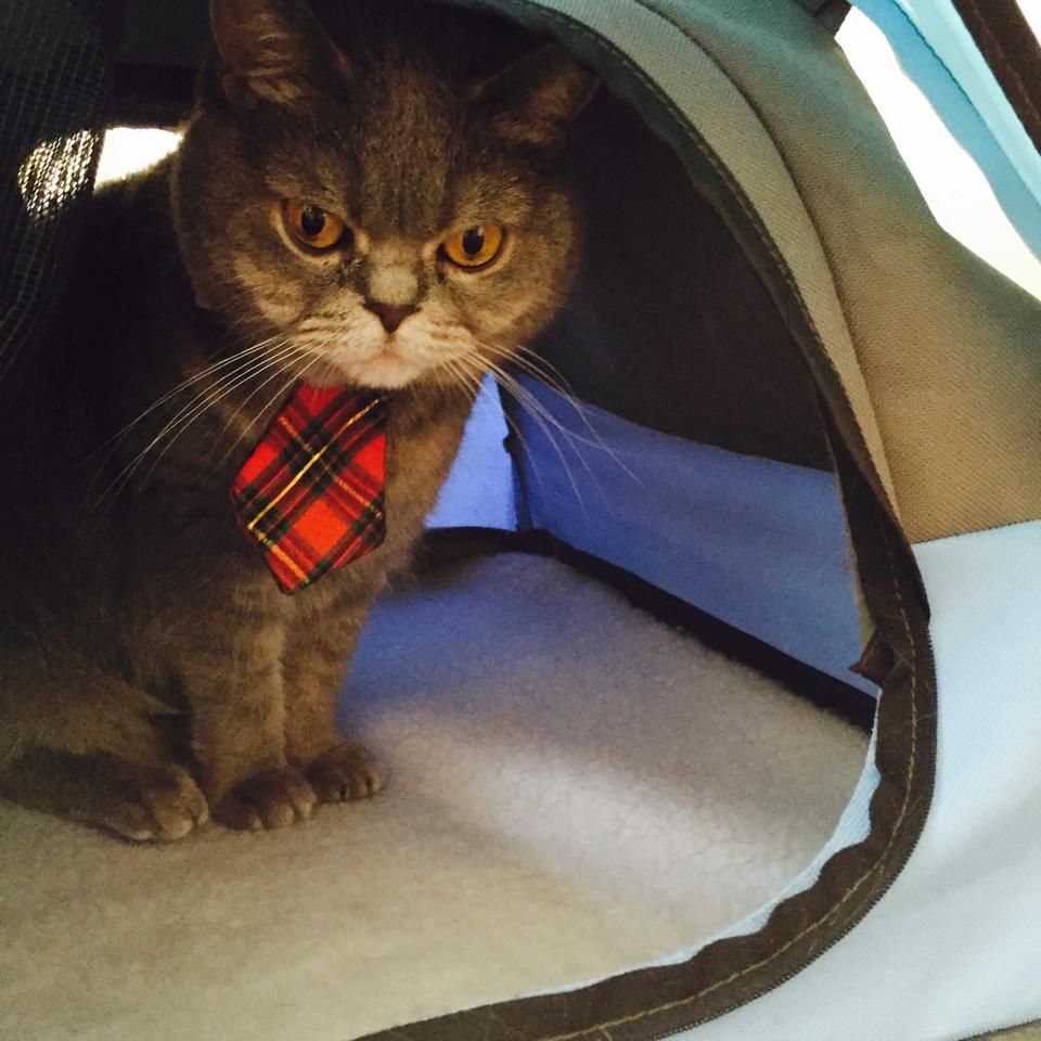 cat camp tent 4