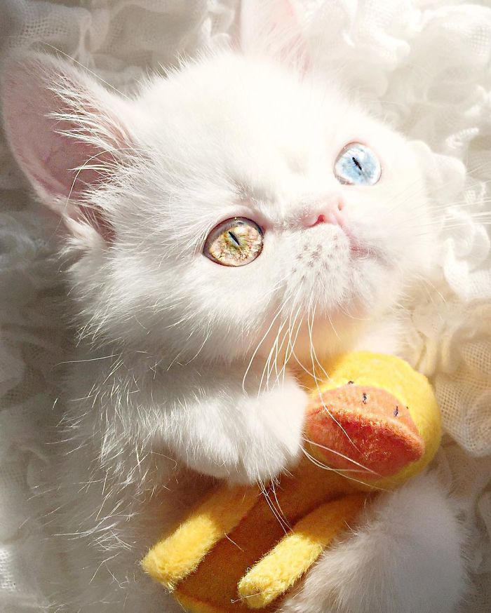 pam pam the cat 6