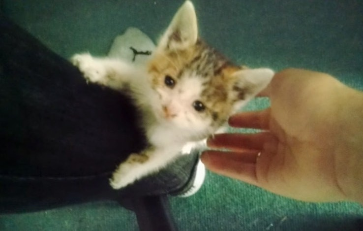kitten climbing bikers leg