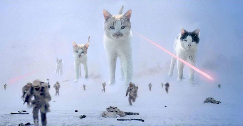 cAT cAT Walkers cat photoshop battle