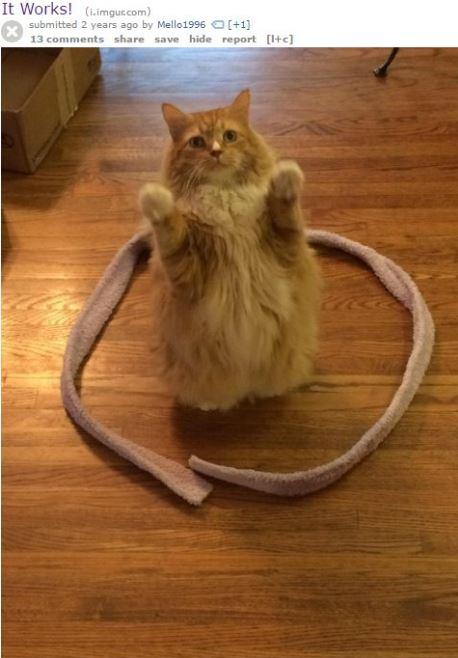 cat trap 15
