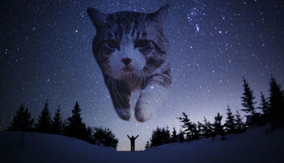 cat photoshop explosion 11