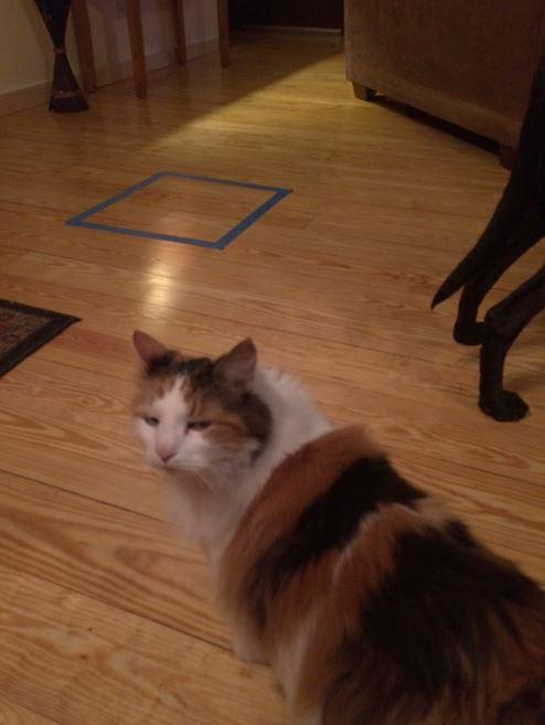 cat trap 9