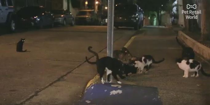 stray cats of puerto rico waiting for glen