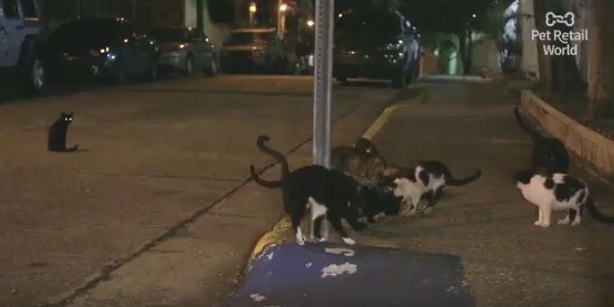 stray cats of puerto rico waiting for glen