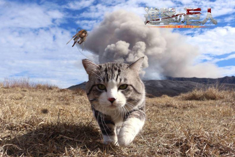 cat explosion photoshop 13