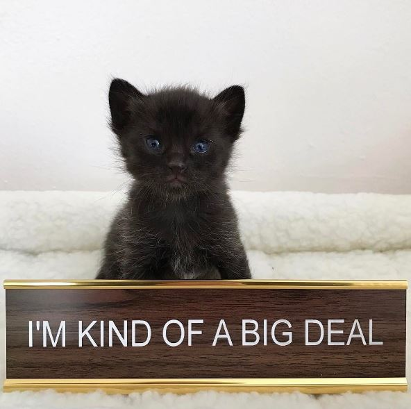 black kitten big deal