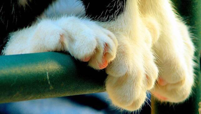 cat paws 5
