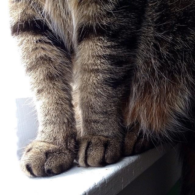 cat paws 7