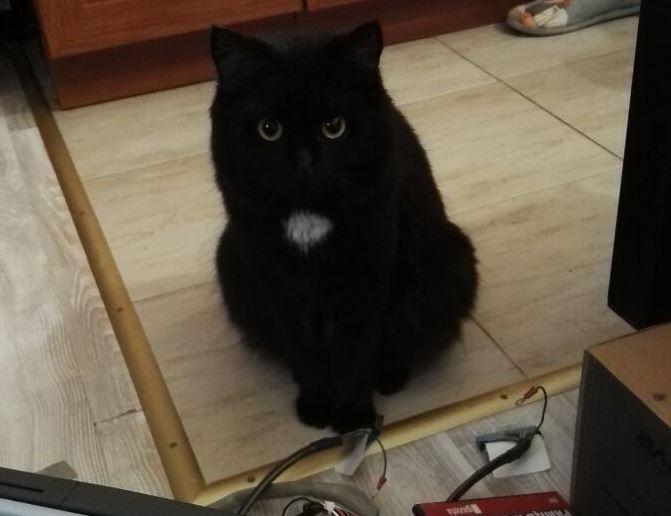 black cat dark sorcery